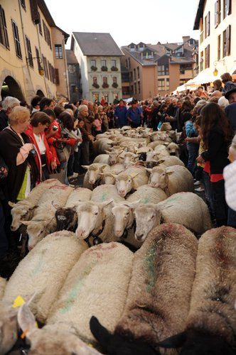 Retour Des Alpages le 8/10 2010-11-PHC-1