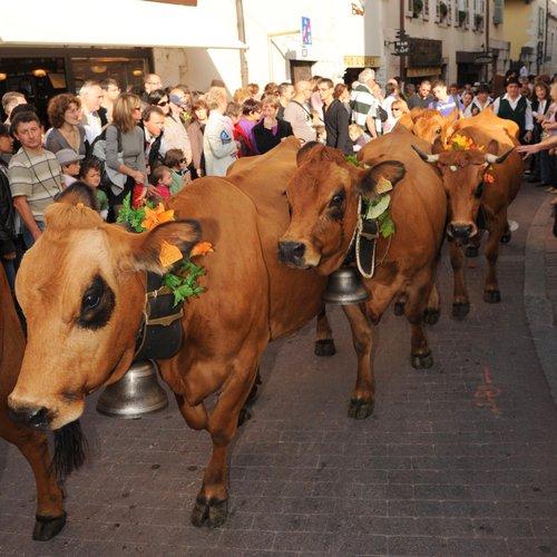 Retour Des Alpages le 8/10 2010-11-PHC-13