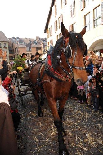 Retour Des Alpages le 8/10 2010-11-PHC-14